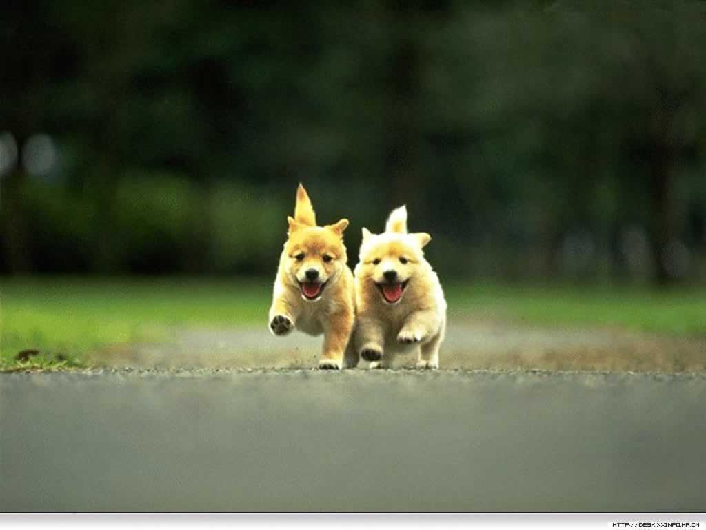 wallpaper gallery cute pupies wallpaper 2