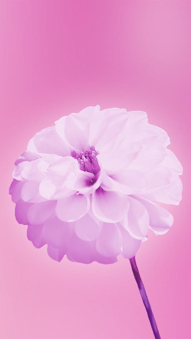free wallpaper phone pink flowers wallpaper iphone 5