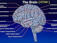 Cara Cerdaskan Otak Anak