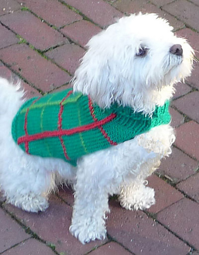 Knitted Dog Coats Patterns Free : Miss Julias Patterns: Free Patterns - Everything for Dogs - Coats & ...