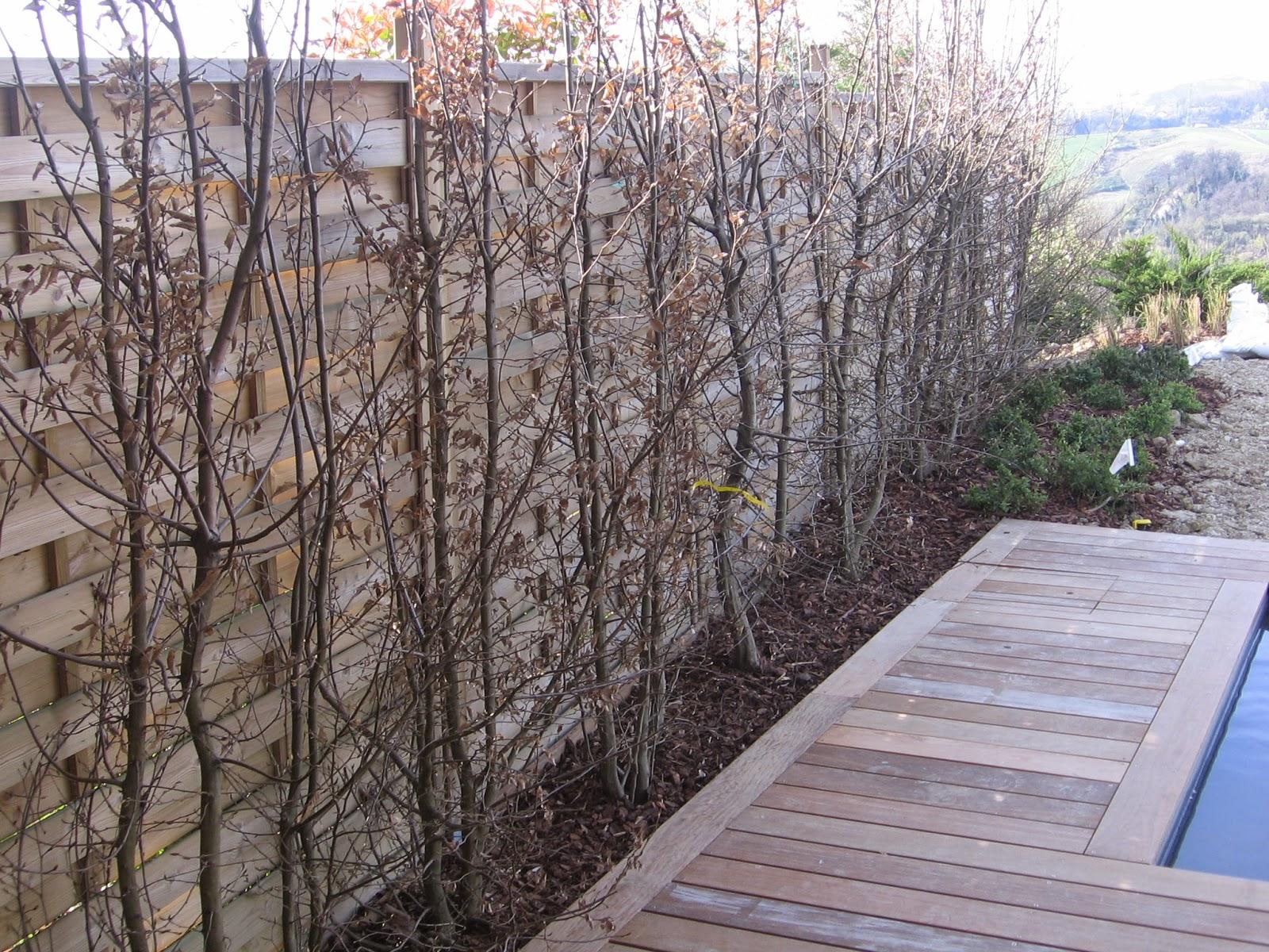 Il giardino delle naiadi un giardino al vento for Piante per esterni resistenti