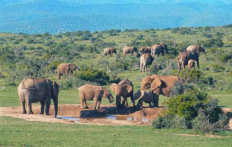 Addo South Africa  city photo : Hello Africa!: Addo Elephant National Park South African Eastern ...