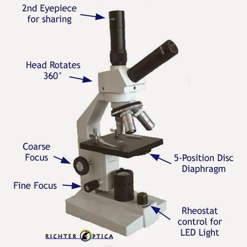student microscope labeled diagram