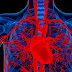 5 Amazing Facts Regarding Heart Health and Heart Problem