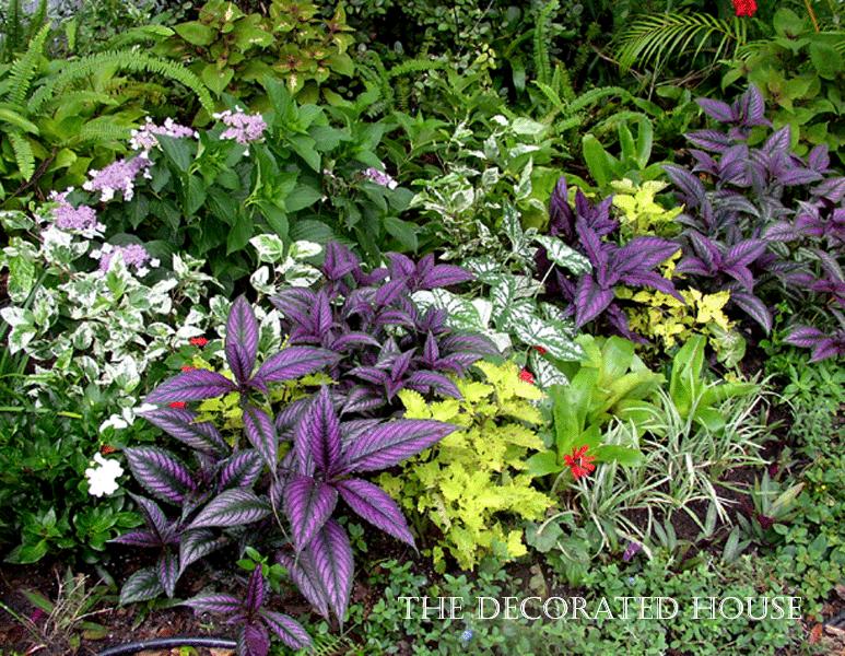semi shade garden ideas photograph semi shade morning sun