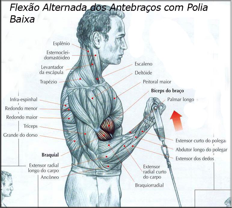Luciano Cavalcante Personal Trainer: ANATOMIA DOS MOVIMENTOS DA ...