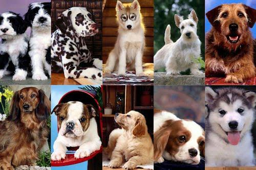 Fondos o wallpapers de perritos para iPhone y iPod Touch