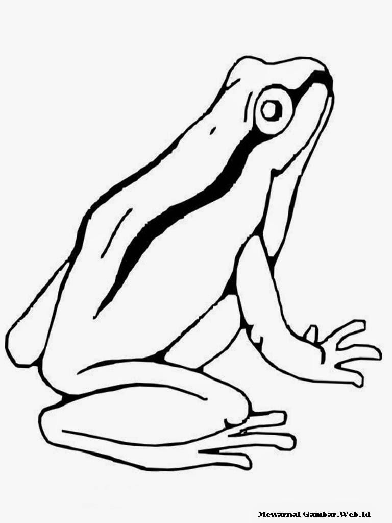 gambar sketsa katak