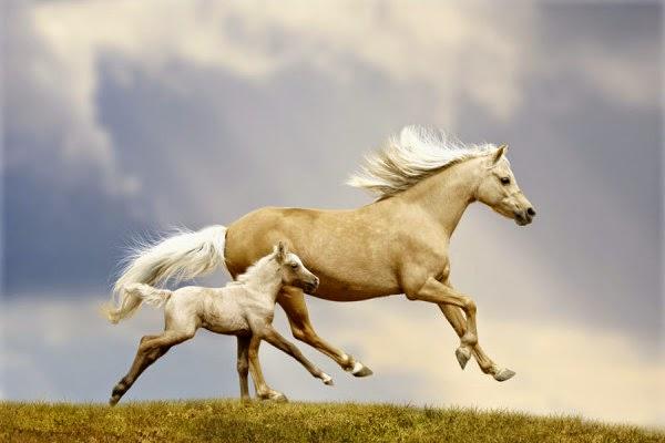 خلفية فوتوشوب لحصان ابيض جميلة