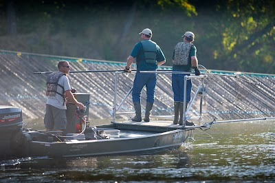 Michigan DNR Fisheries Division prepares for potential Asian carp invasion