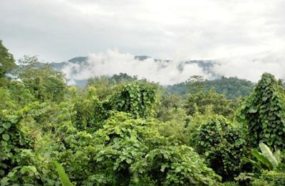 Cagar Alam Gunung Sibela - Wisata Pulau Bacan (Halmahera Selatan)