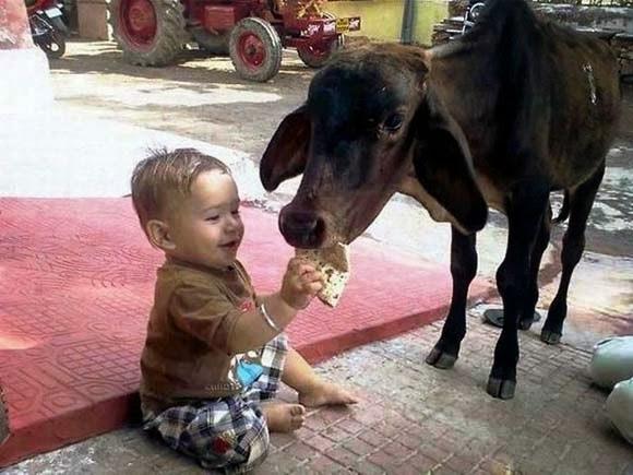 Lustige und niedliche Tiere Facebook