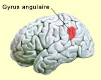 neuroscience gerstmann dysgraphie