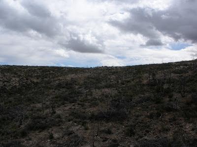 Bosque Alto monte quemado Valmadrid
