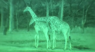 Wildlife Viewing with Night Vision Binoculars