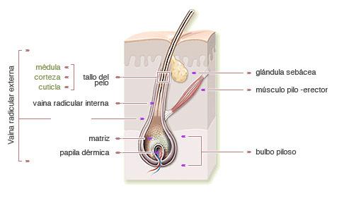 FTrapeutas: Anatomía--> Neurología--> 2:Sentidos