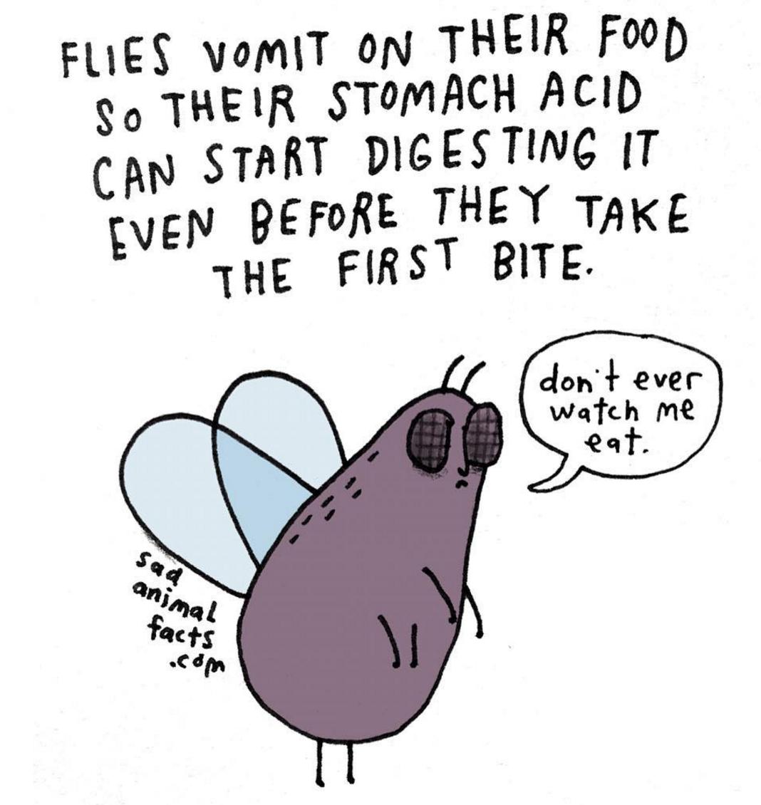Fly vomit drop