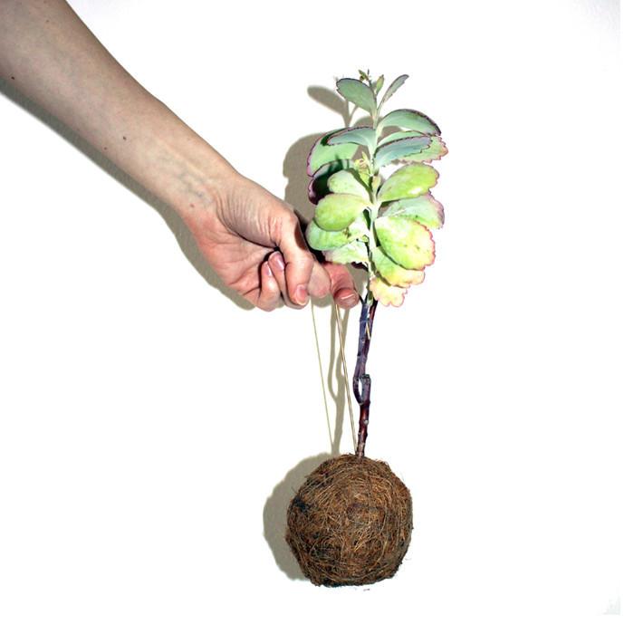 hængende moderne plante til hjemmet
