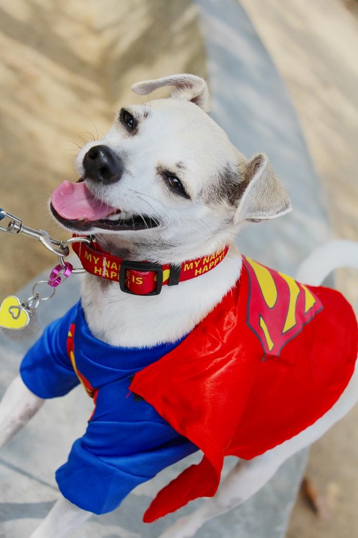 Happy Dog Halloween