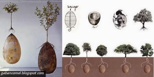 Capsula Mundi Keranda Go Green Ubah Mayat Jadi Pokok
