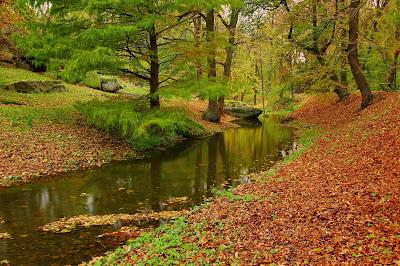 Paisaje de otoño con rio de agua cristalina en el bosque