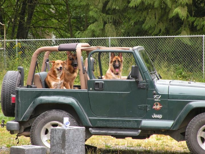 10 Tips For Camping With Your Dogs
