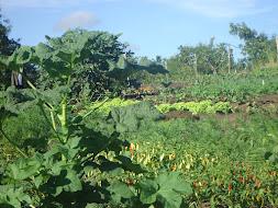 Produção de hortaliças orgânicas