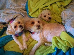 Our Precious Rescued Puppies Adopted Through LL Dog Rescue