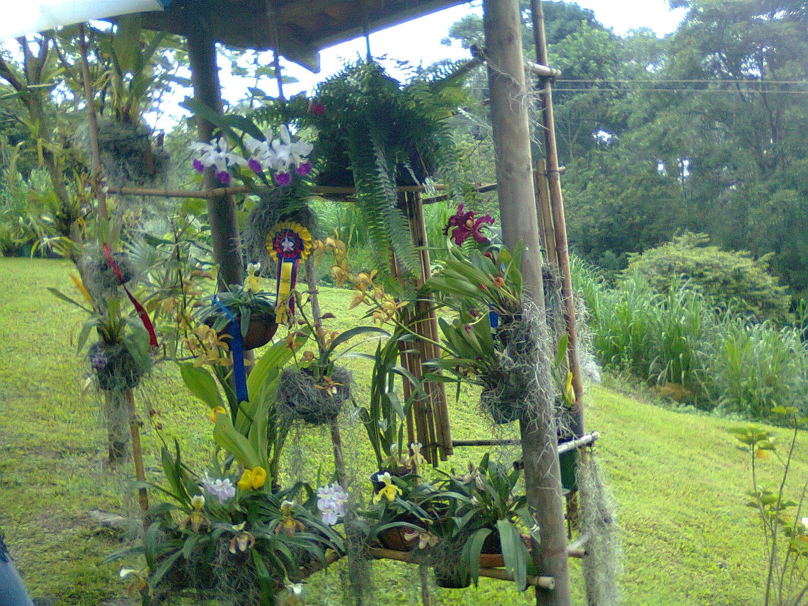 el jardin de c ndida ideas para decorar el jardin. Black Bedroom Furniture Sets. Home Design Ideas