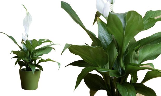 plantas para jardim muito sol: de Inverno ou Internos!!! E 20 Plantas ideais para ambientes fechados