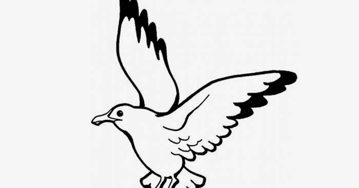 Seagull Coloring Page Free Coloring Pages And Coloring