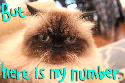 Call me maybe cat 02