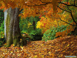 Autumn Scenario