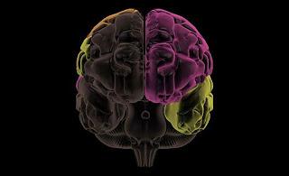 stroke, perinatal stroke, brain, brain injury, head injury
