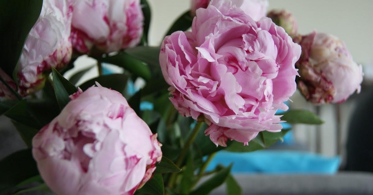 Pretty Peonies From Debenhams Flowers Frills N Spills