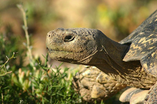Who-Won-African-Tortoise-Or-European-Hare