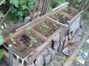 Puutarhapalveluina esim yrtti- ja auringonkukkapenkkejä eri puolille pihaanne
