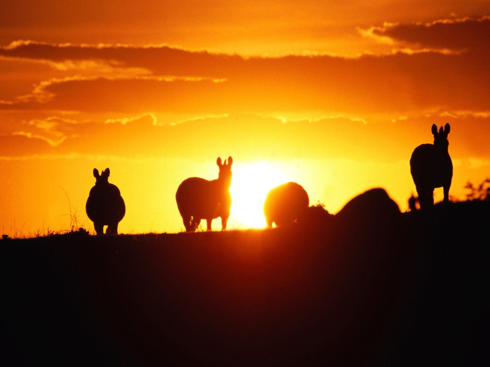 http://4.bp.blogspot.com/-80Ce93D0swM/T-HnKNnNGqI/AAAAAAAAA64/20tEMq2_Cbc/s1600/horses_shadow_sunset_wallpaper-1600x1200.jpg