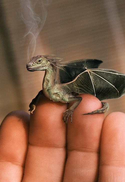 08-Dragon-1-Jan-Oliehoek-Animal-Mashup-&-Photo-Manipulations