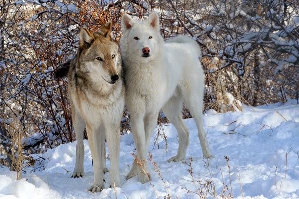 O cão é um animal carnívoro ou onívoro?