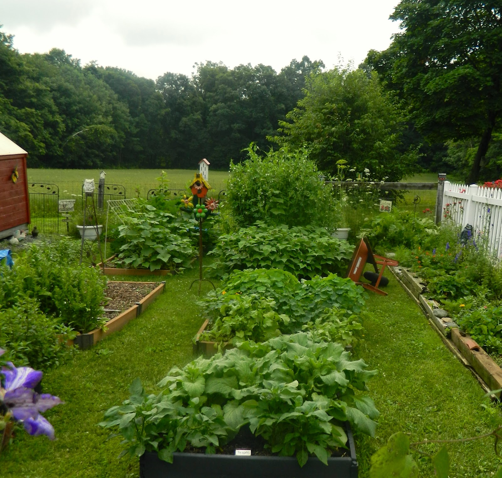 Pam's English Cottage Garden: What's New In My July Garden?