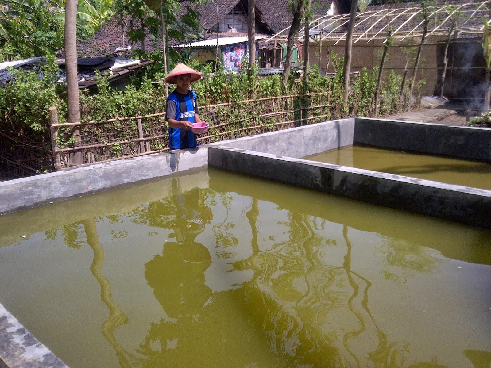 Perikanan Dari Pemuda Kreatif Bojonegoro Didik Setiawan Pelet Ikan 781 Eceran 1 Kg Peternak Beri Pakan Mimpi