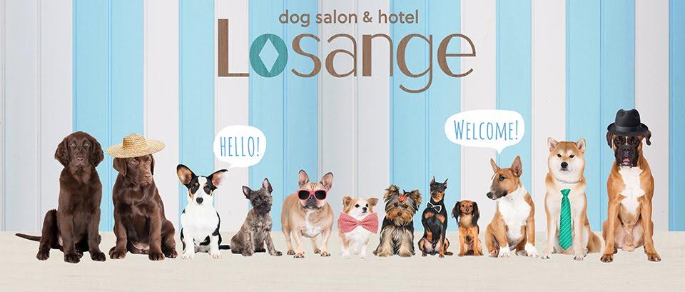 Losange blog