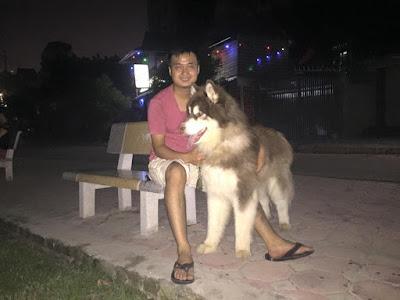 Bổ sung canxi cho chó Alaska