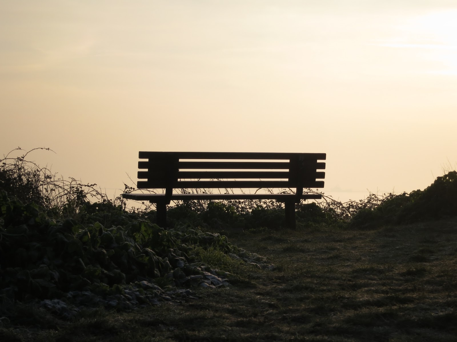 Public Bench with morning sunlight beyond with frosty grass and wild plants