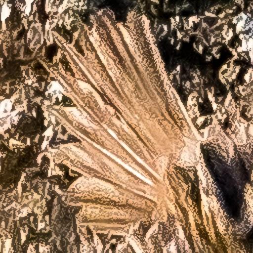 Certhia sp.