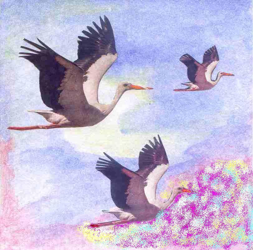 image Dos polluelos traviesos chupan y lamen la misma erección al mismo tiempo