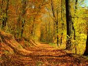 Bosque en otoño. Fotografía de un hermoso bosque en la temporada de otoño. bosque en otoã±o