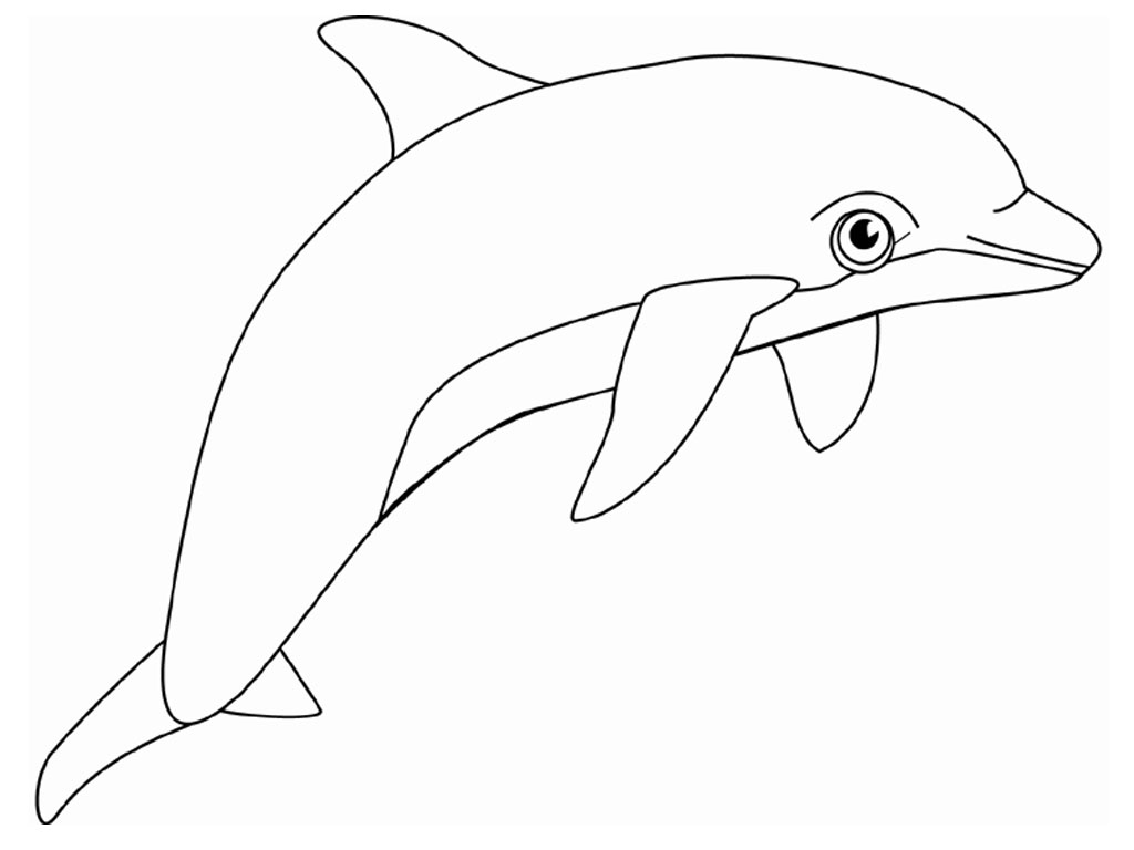 Image Result For Coloring Page Bottlenose Dolphin