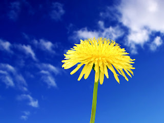 Yellow Flower - Free Download Wallpapers